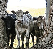 The Three Cows by Kimberly Palmer