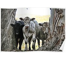 The Three Cows Poster