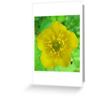 Build Me Up, Buttercup... Greeting Card