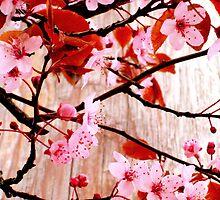 Cherry Zen by karolina