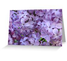 Lilacs! Greeting Card