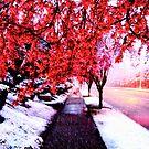 Snowy Spring by karolina