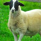 Mrs Black Faced Sheep :) by Penny Smith
