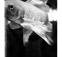 Fish Study Photographic Print
