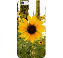 Sunflowers! iPhone Case/Skin