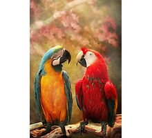 Animal - Parrot - We'll always have parrots Photographic Print