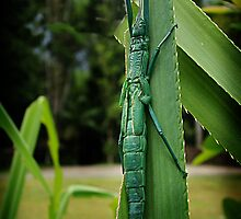 Peppermint stick insect by Peace Mitchell