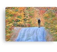 Moments That Take Our Breath Away Canvas Print