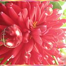 Red Flower Bubbles by judygal