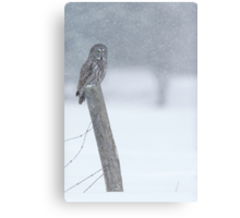 Watching over winter... Canvas Print