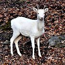 Spirit Deer - Omega Park by Poete100