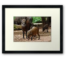Mother Pig and Her Piglets Framed Print