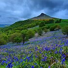 Roseberry Topping Bluebells by Stewart Laker