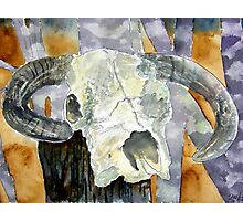 Cow skull southwestern art Photographic Print