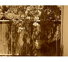 front yard Photographic Print