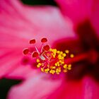Hibiscus center by deahna