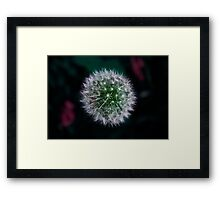 Dandy's Lion Framed Print