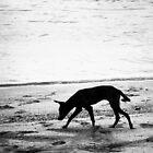 shadow hunting by wynthorn