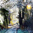 Winter Walk by Paula Oakley