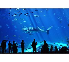 Whale Shark Photographic Print