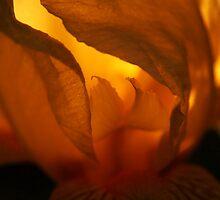 Illuminated by Gaby Swanson