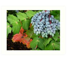 Oregon Grape Art Print