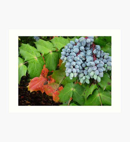 Oregon Grape Art Print