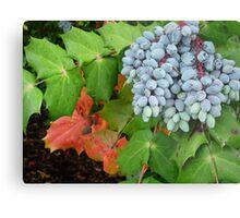 Oregon Grape Metal Print