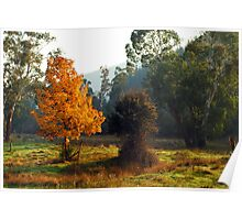 Autumn morning - Bright Poster