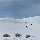 snow scene  near mono lake by noel aarons