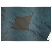 cow nose ray Poster