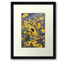 Silver & Gold -- Calliopsis (Coreopsis) Framed Print