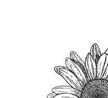 daisy by lilaferraro