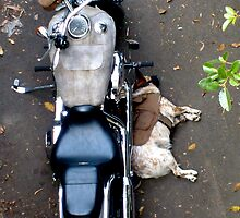 Easy rider by Route64