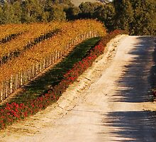 Autumn Vines by KathyT