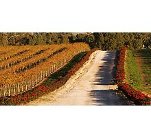 Autumn Vines Photographic Print