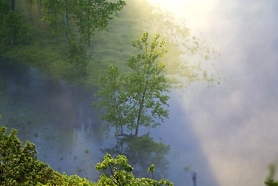 Through the Light by Lisa Miller