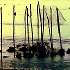 tomorrow's mangroves by wynthorn