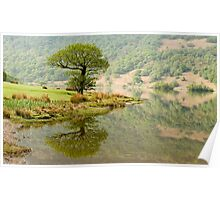 A Lonely Crummock Tree Poster