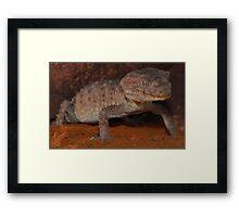 Centralian knob-tailed gecko Framed Print