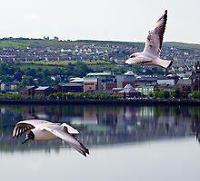 Gulls in Derry by Lunatic