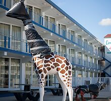 Giraffe wrapped in trash bags. Wildwood Crest, New Jersey by Richard Peevers
