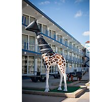Giraffe wrapped in trash bags. Wildwood Crest, New Jersey Photographic Print