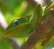 Chameleon macro (Cuba) by jdmphotography