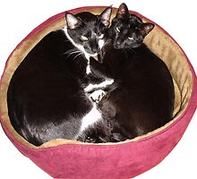 Two Cats in Red Bed by petercoupe