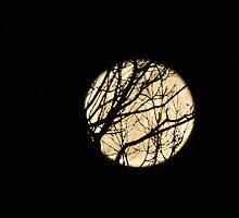 Werewolf Magic ... by LavenderMoon