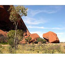 Small Native Tree at Base of Ayres Rock, Northern Territory, Australia. Photographic Print