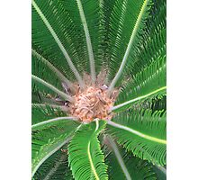Journey to the Center of a Cycad Photographic Print