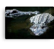 Crocodiles. Sleeping or Stalking? Canvas Print