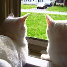 Spying on the Neighbors by hickerson